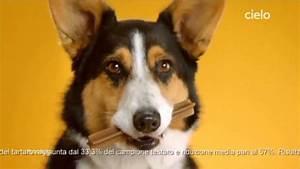 Dentiere Per Cani Dentastix Spot 2014