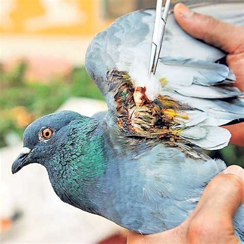 forest department ahmedabad ngos brace for rise in bird