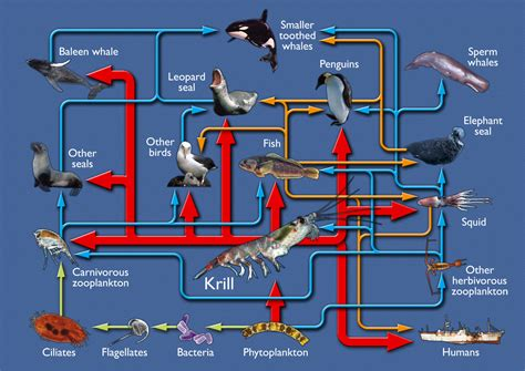marine environment discovering antarctica