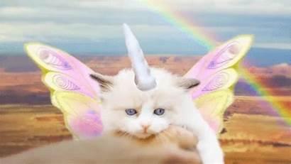 Kittens Kitten Unicorns Gifs Animated Pegacorn President