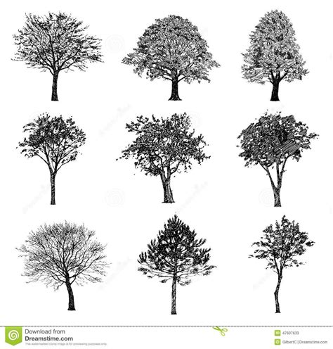sketch realistic trees google search