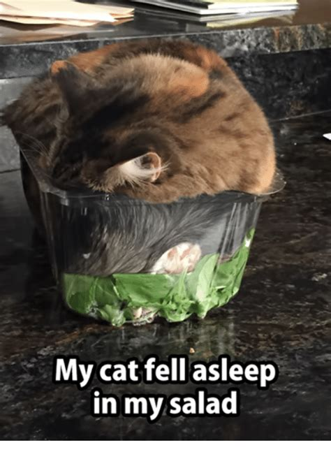 Salad Meme - 25 best memes about glowing eyes meme glowing eyes memes