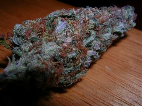 weed green   orange hairs  aint