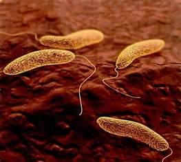 Cholera Vibrio Cholerae