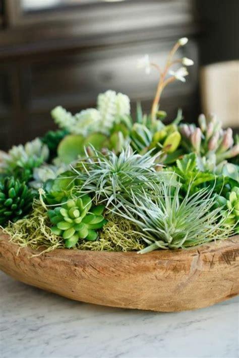 plantes succulentes idees darrangement