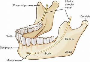 Anatomy Of Oromandibular Cancer  Headandneckcancerguide Org