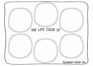 Salmon Life Cycle Worksheet