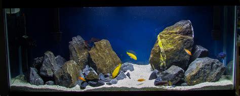 Aquascaping Cichlid Aquarium by Cichlid Aquascape Cichlids