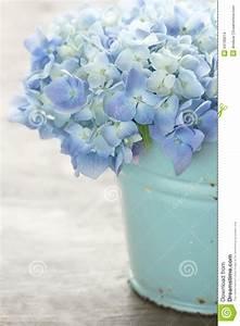 Des Couleurs Pastel : fleurs bleues d 39 hortensia de couleur en pastel photo stock image 34196014 ~ Voncanada.com Idées de Décoration