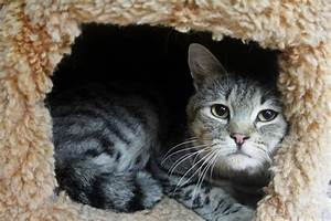 Mickey - ADOPTED! - North Country Animal League
