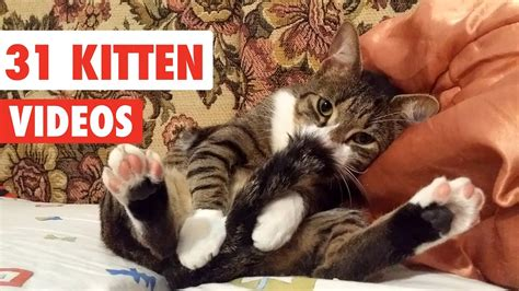 31 Cute Cats  Funny Cat Video Compilation 2017