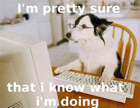Dog On Computer Meme - hilarious photos