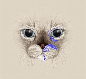 Create a Large Face, Cat Illustration from Stock in Adobe ...