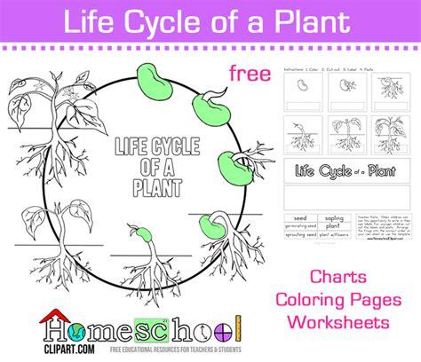 seed cycle worksheet all worksheets 187 plant cycle worksheets printable