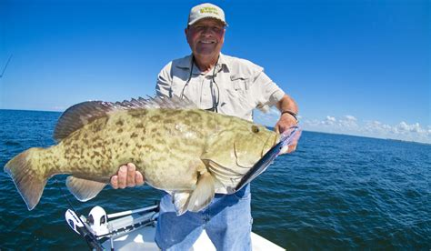 grouper gag fishing trolling nearshore plug chunky techniques fall offshore