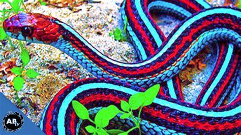 world s most colorful snakes ep 426 snakebytestv