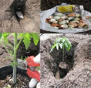 Planter Des Graines De Tomates : comment planter correctement les tomates pour obtenir des ~ Dailycaller-alerts.com Idées de Décoration