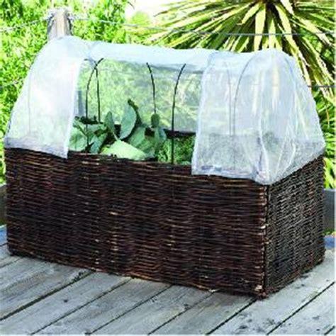vegetable  tomato planter  patio growing