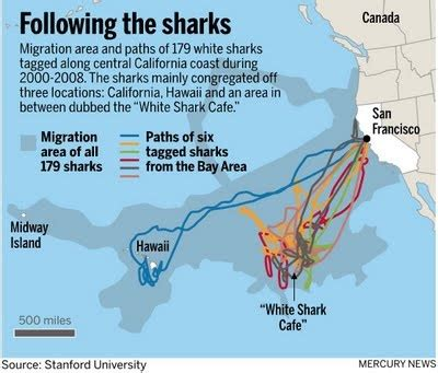 tracking sharks in the space age the fisheries