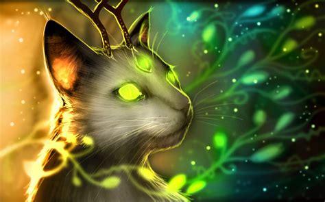 magic cats hd wallpaper  gludy