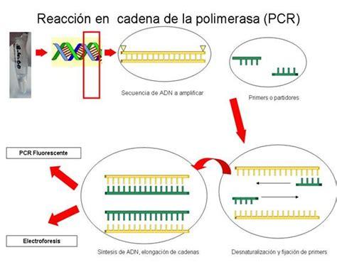 bureau de la pcr biolog 205 a molecular pcr en enfermedades cerebrovasculares
