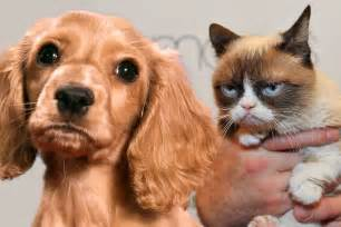 cats and dogs why do dogs and cats each other why do they not get