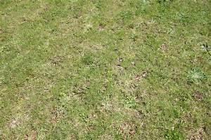 Tondre La Pelouse Sans Ramasser : gazon clairsem et mauvaises herbes forum gazon ~ Melissatoandfro.com Idées de Décoration
