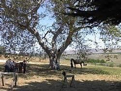 Nipomo, California - Wikipedia