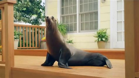 thompsons water seal waterproofing stain tv commercial