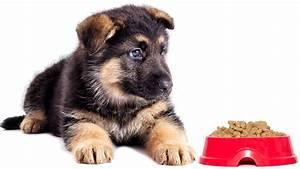 choosing the best food for german shepherd puppies With german shepherd dog food