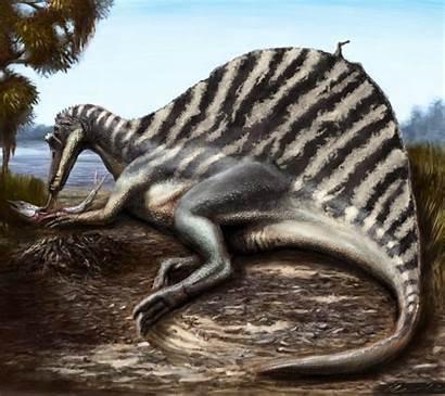 Spinosaurus Wallpapers Eating Lake Dinosaur Fish Tree