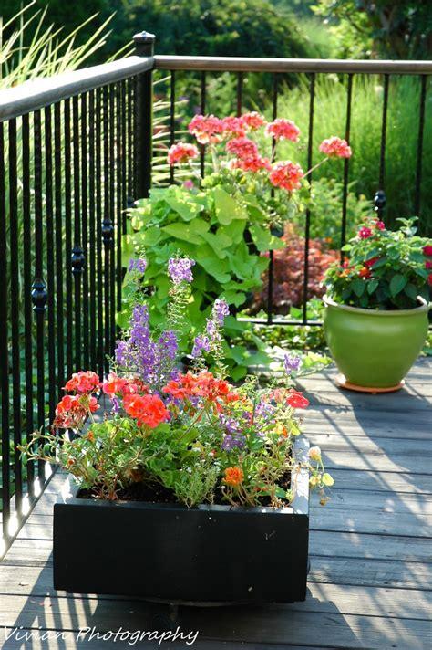 Love Container Gardening  My Gardens Pinterest