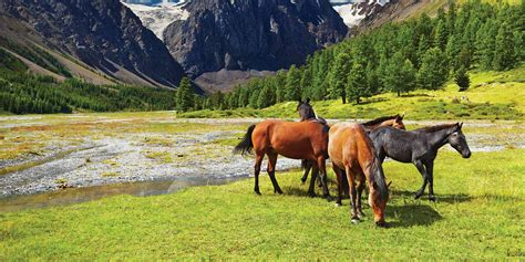 horse ranches farms country property equestrian equine properties stables horseproperty unitedcountry
