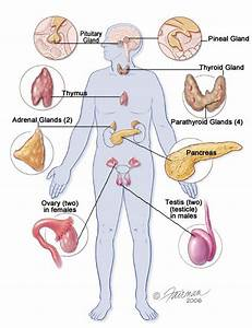 25 Best Knowing Deeper About Endocrine Function Of Pancreas Images On Pinterest