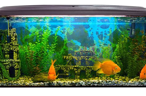 d 233 co aquarium poisson