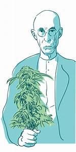 Cannabis Manual  Cbd And Synergy