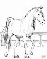 Horse Coloring Pages Trakehner Printable Sheets Drawing Dot Colorings sketch template