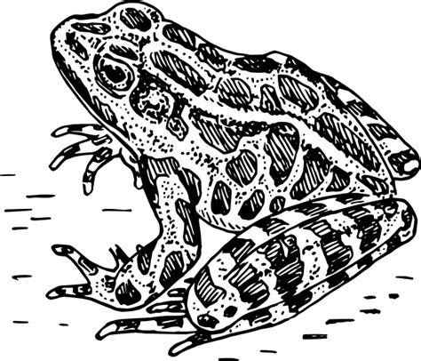 Frog Clipart Black And White Frog 7 Clip At Clker Vector Clip