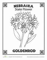 Flower Nebraska State Coloring Pages Worksheets Goldenrod Oregon Bird South Worksheet Science Dakota Sheets Block Rushmore Studies Social Education Grade sketch template
