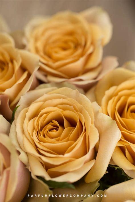 premium garden rose golden mustard parfum flower company