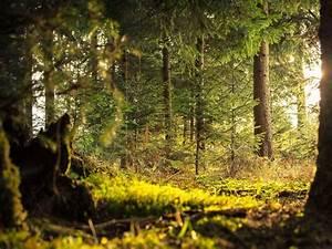 Bilder Vom Wald : rheinauer wald urlaubsland baden w rttemberg ~ Yasmunasinghe.com Haus und Dekorationen