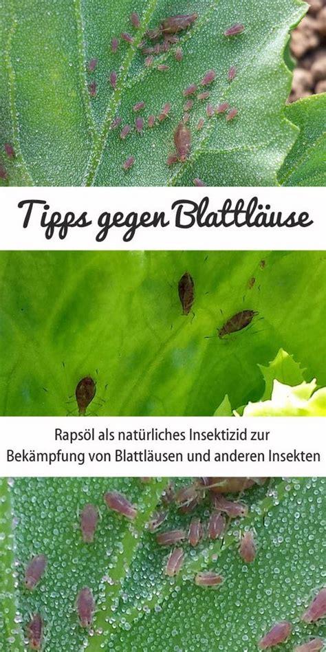 nützlinge gegen blattläuse kaufen spritzmittel gegen mehltau bio pflanzenspray f r mehltau anf llige pflanzen schacht bio