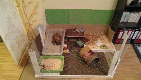 kaninchen in der wohnung kaninchen braucht kameraden aber in der wohnung kein platz kaninchen
