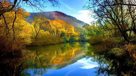fall river peaceful water willow  yellow leaves blue