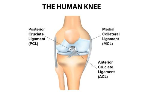 understanding kevin durant s grade 2 mcl sprain in