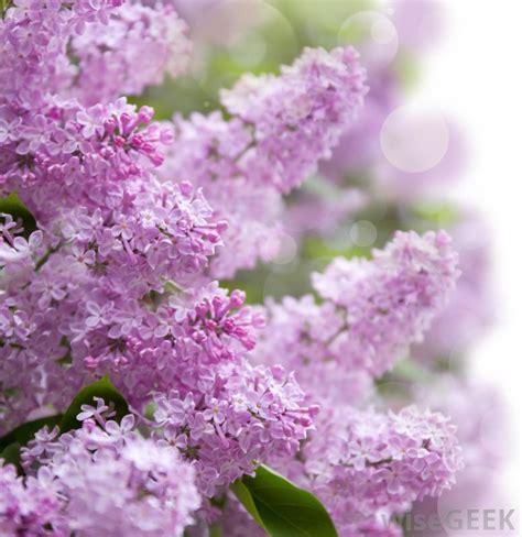 beautiful garden flowers inside decorating ideas