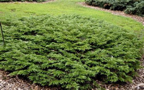 buy calgary carpet juniper  count flat quarts