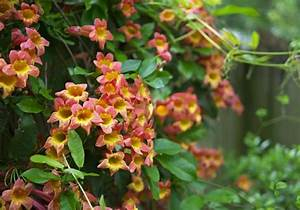 Pergola Pour Plante Grimpante : quelle plante grimpante pour votre jardin ~ Premium-room.com Idées de Décoration