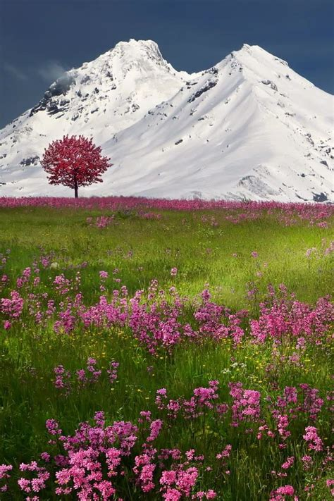 134 Best Alpine And Meadow Swiss Flowers Images On