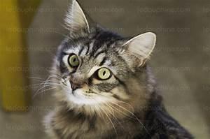 Comment Savoir Si L On Est Enceinte : comment savoir si son chat est enceinte ~ Dode.kayakingforconservation.com Idées de Décoration